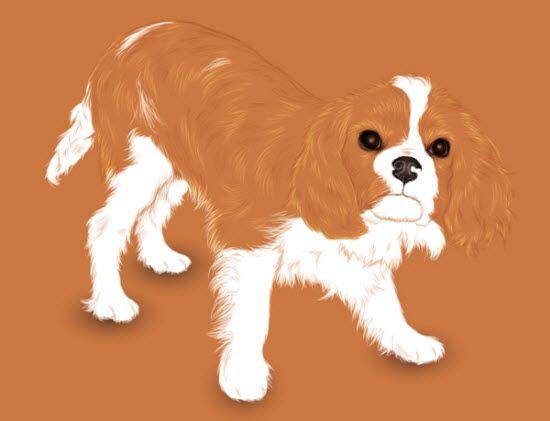 Adobe Illustrator Tutorial